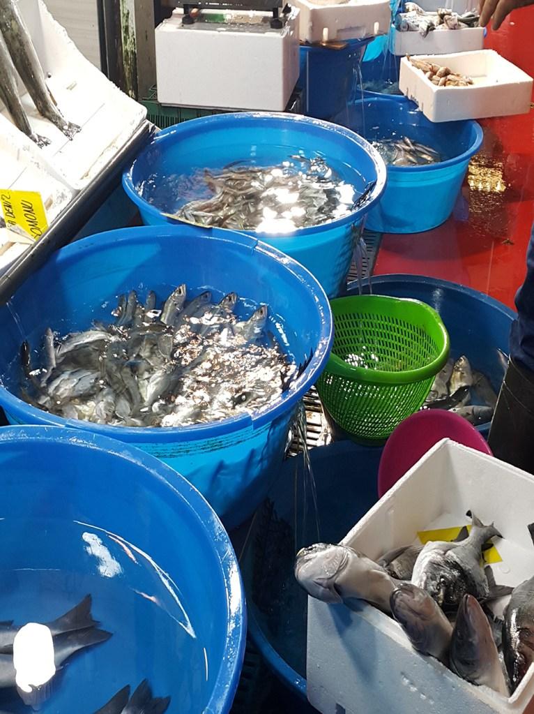 hangi balık hangi ayda yenir